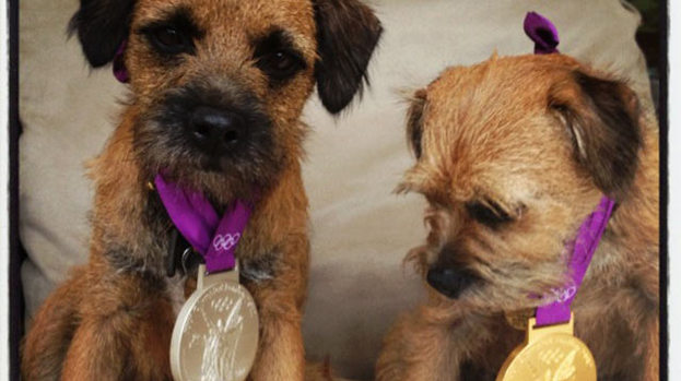 They're ace: Andy Murray's pups show off his medals