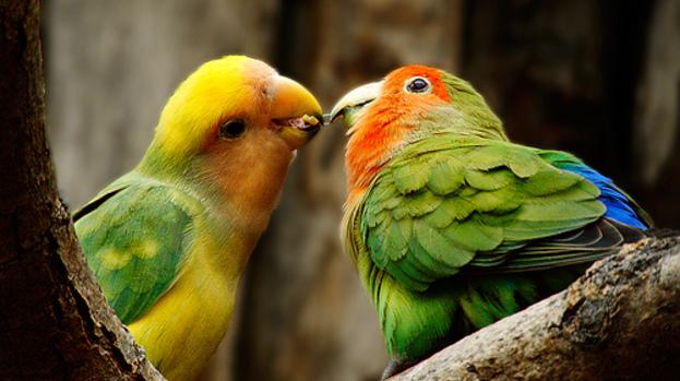 towns lovebirds by glassesgator - photo #13