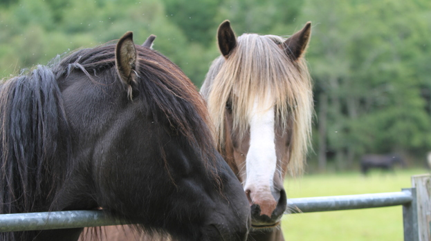 Horse Charity: Rescued horses enjoy the facilities at Belwade.