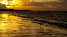 Oystercatchers at sunset