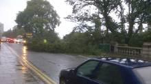 The fallen tree on Aberdeen's Union Terrace.