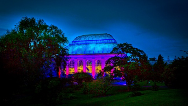 Night In The Garden Light Show Opens At Edinburgh 39 S Botanic Garden Stv Edinburgh Edinburgh