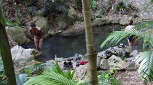 I'm A Celebrity 2014: Day 15 in the jungle