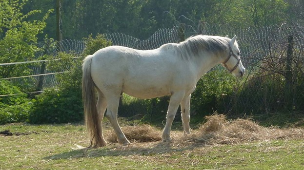 Potential theft: Horse and pony owners are being encouraged to be vigilant