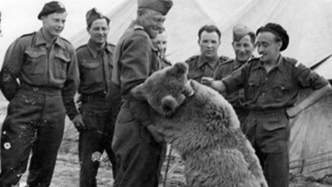 Legend of Wojtek the bear to be turned into epic war movie