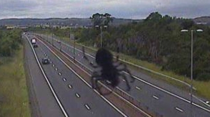 traffic camera snaps 'giant spider' crawling up m8