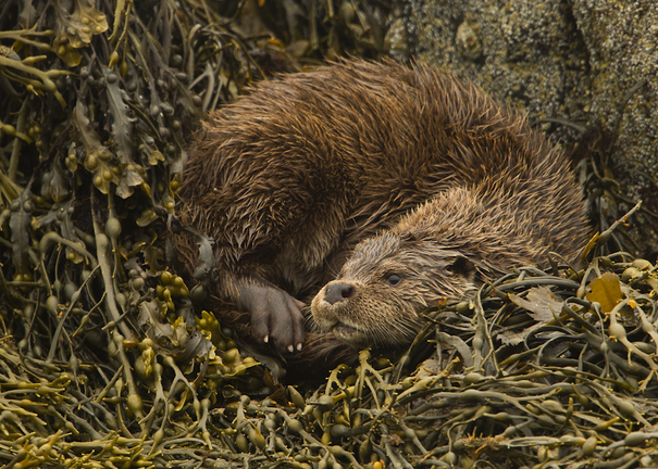 Animal Portraits By British Wildlife Photographer George: British Wildlife Photography Awards 2015 Winners In