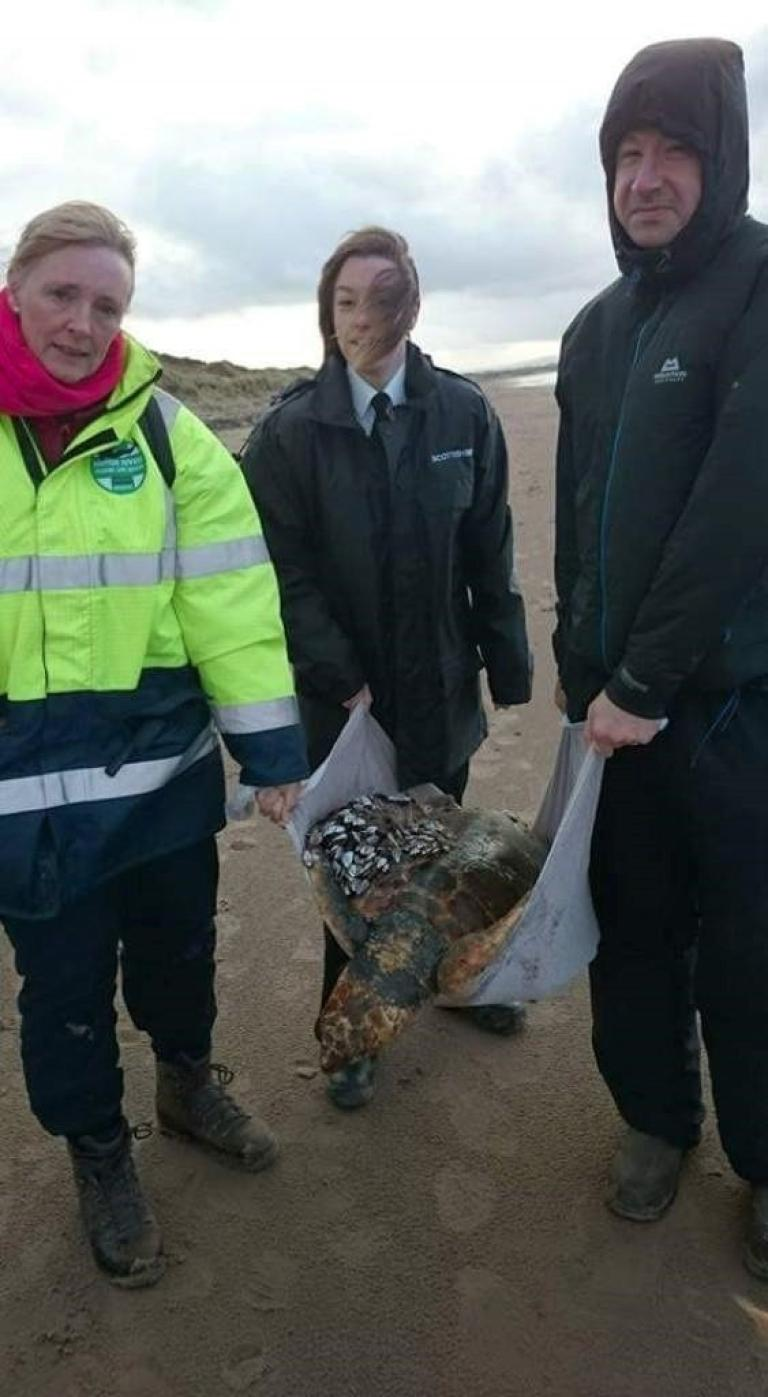 A LITTLE GEM TO DISPEL, FOR A MOMENT, THE DOOM AND GLOOM IN EUROPE - Page 2 384378-endangered-loggerhead-sea-turtle-washed-up-on-ayrshire-beach-as-a-result-of-storm-desmond-rescued-by