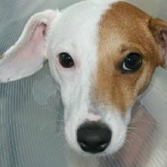 Intersex dog's unique surgery