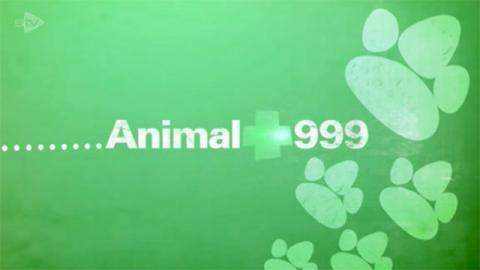 Animal 999
