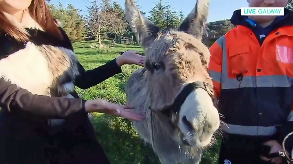 Meet Harriet, the singing donkey